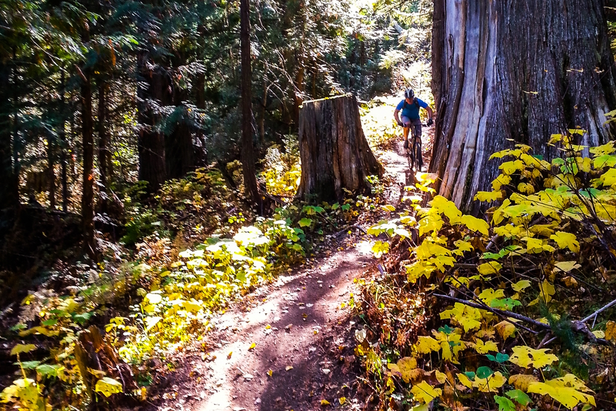 Fall mountain biking in Fernie, BC