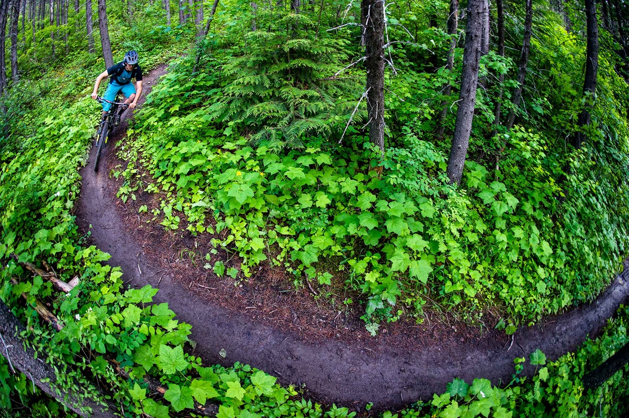 Riding the trails in Fernie