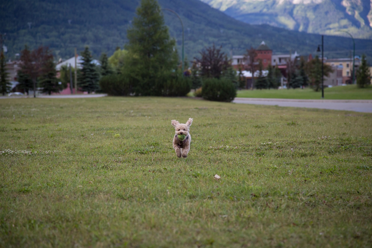 Fernie Aquatic Centre Dog Park, Great For All Sizes