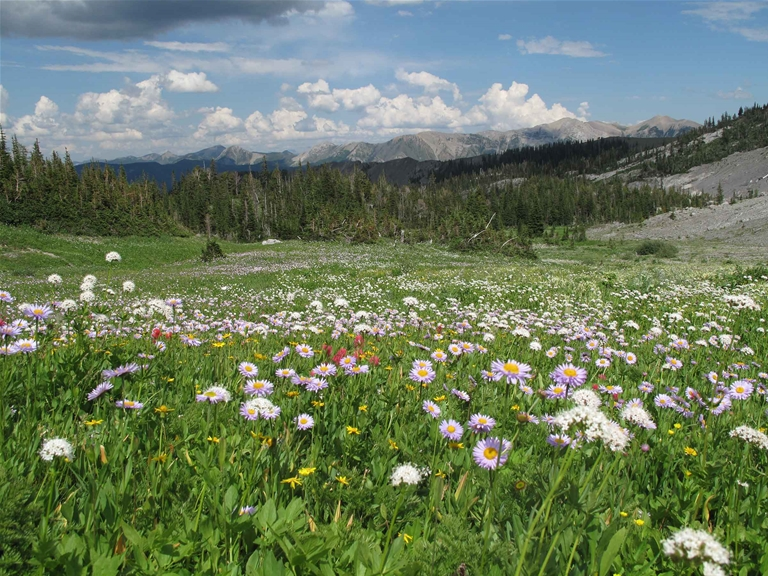 Alpine meadows along Heiko's Trail / Mountain Lakes Trail