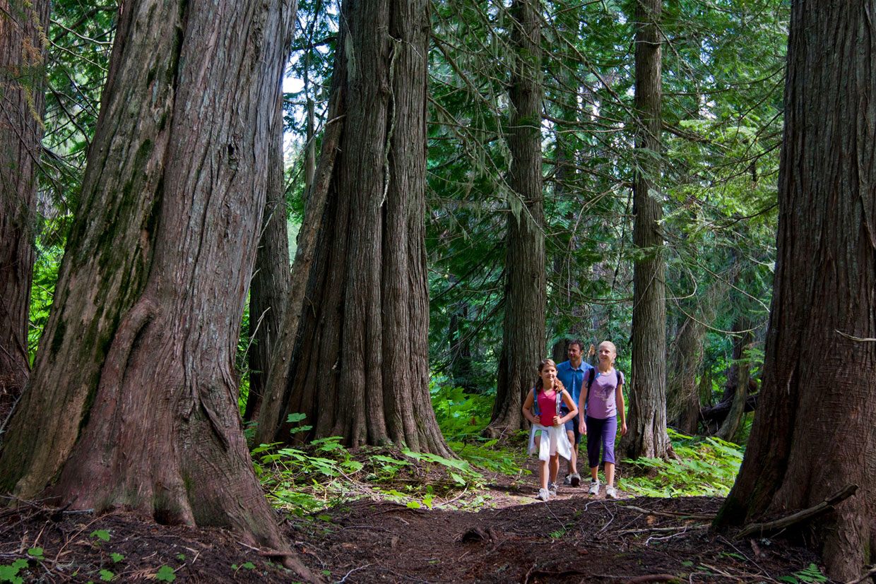 Old Growth Trail at Island Lake Lodge