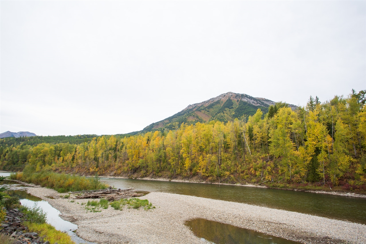 September 28th 2020 - North Fernie Bridge Looking NW towards Mt. Fernie