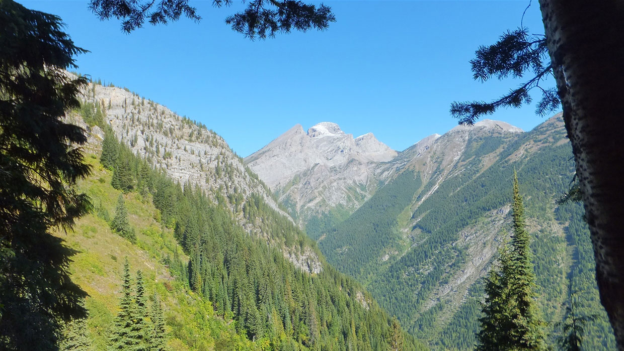 Mt Fernie Hike
