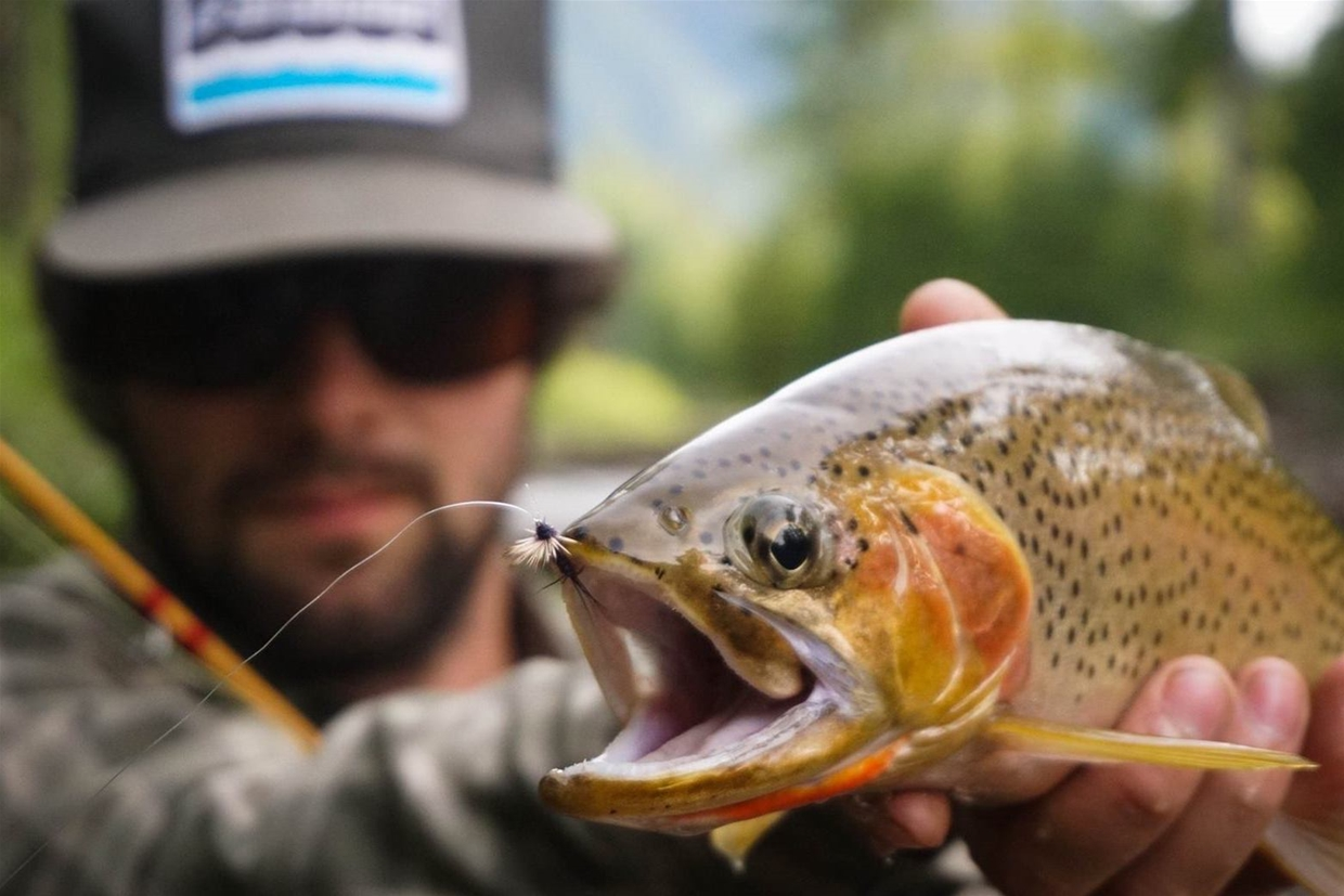 Pure Strain West Slope Cutthroat Trout