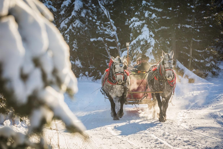 holiday horse drawn sleigh rides at fernie alpine resort