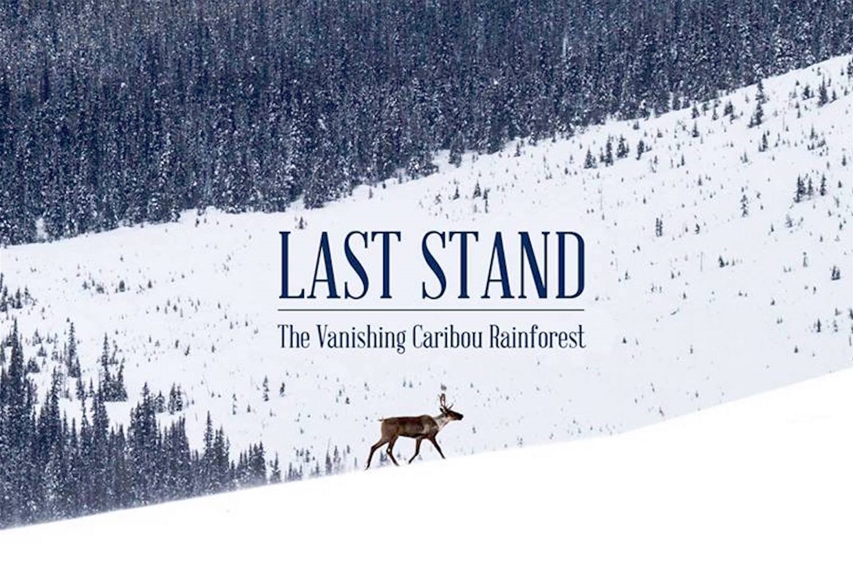 Last Stand - The Vanishing Caribou Rainforest