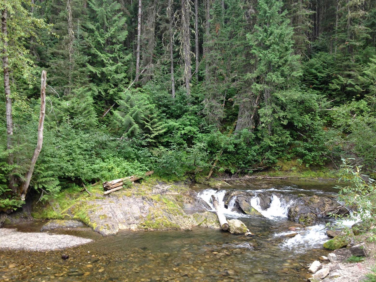 Hiking & biking trails in Mt Fernie Provincial Park